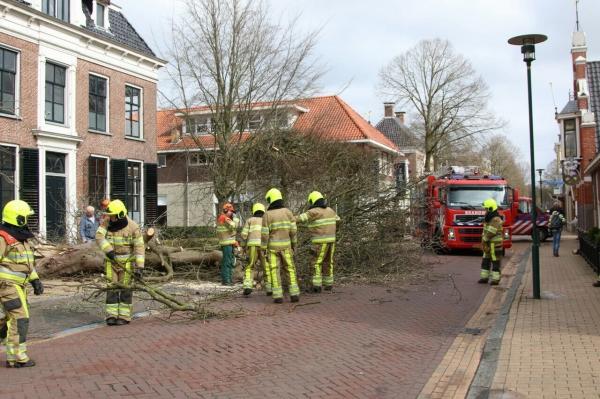 Omgevallen boom stremde verkeer in B'zwaag