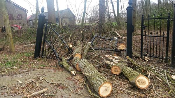 Toegangshek van bos verwoest door boom