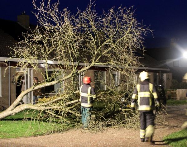 Brandweer verwijdert boom uit tuin