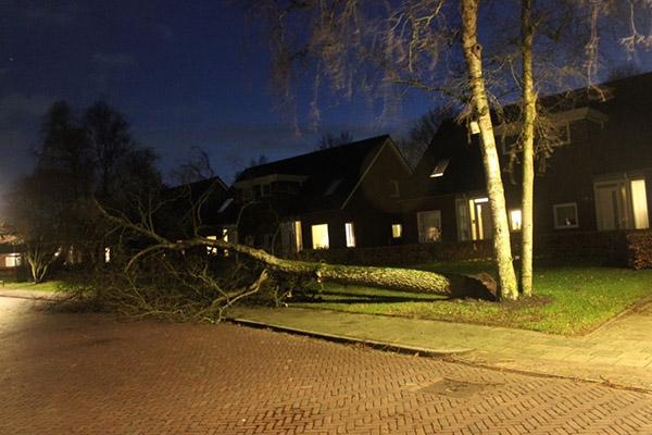 Boom valt over weg in Burgum
