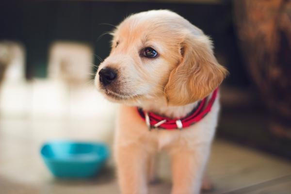 Binnenkort start deur-aan-deur controle hondentaks