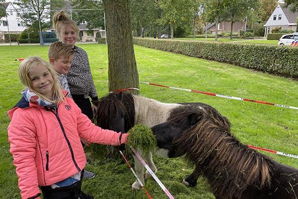 Politie vangt ontsnapte pony's in Burgum