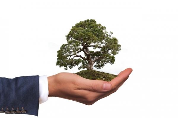 Milieuvriendelijke uitvaart en uitvaartverzekering