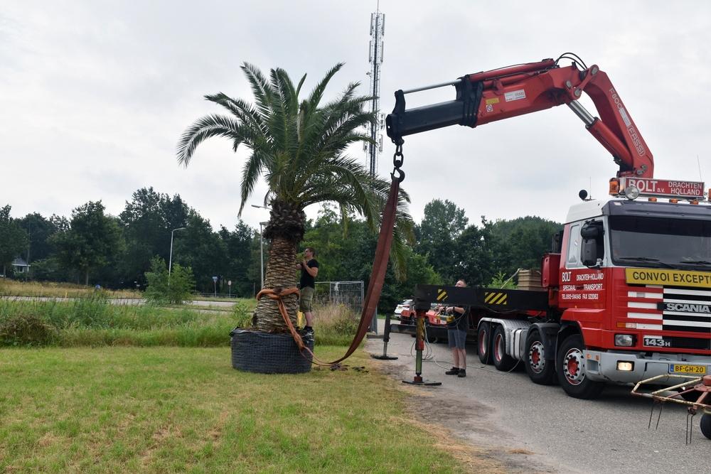 Palmboom geplant op plek van 'nieuwe zwembad'