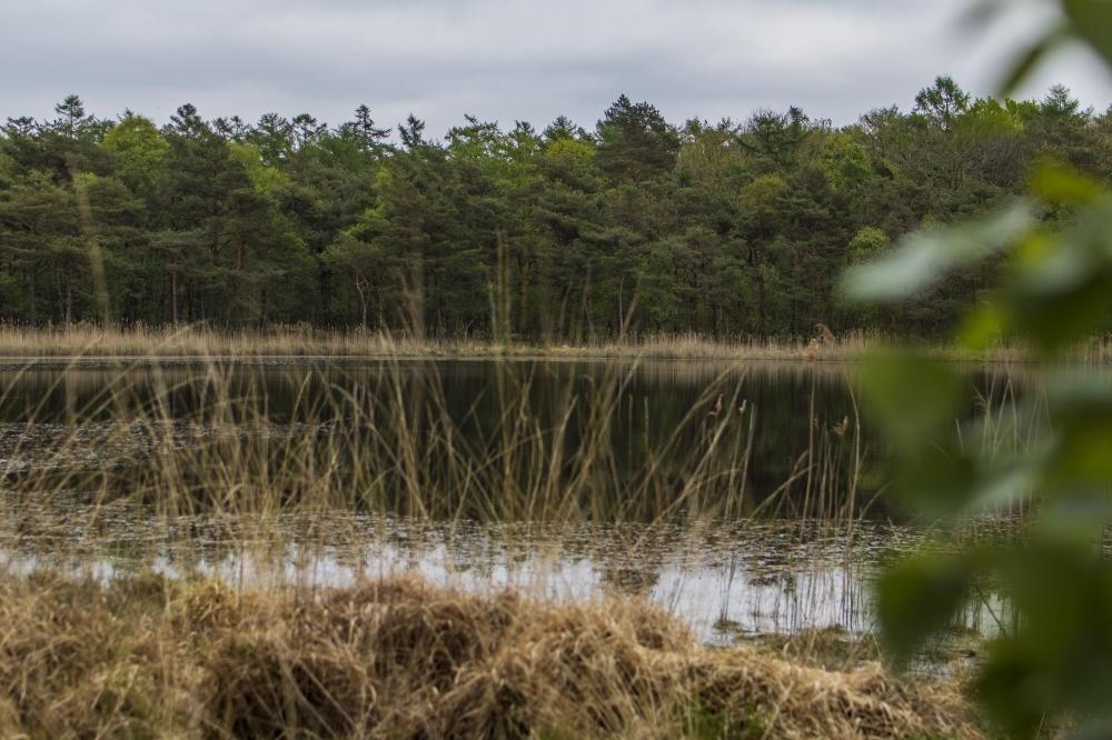 Natuurontwikkeling rond Oude Bosch van start